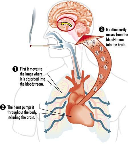 a dohányzás hatása az agyra